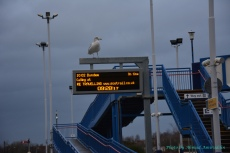 Birds in Leuchars Station Scotland